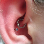 Rook and Conch